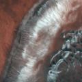 Dune_fields_in_Mars_Green_Crater_card_full