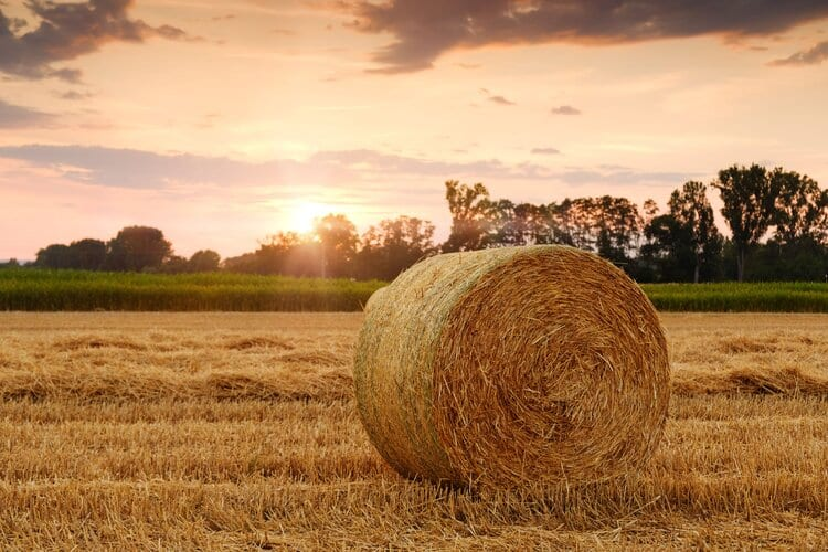 Satellites provide data on crops